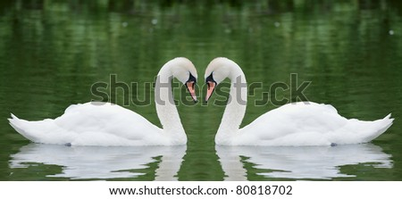 Two swans on the pond - stock photo