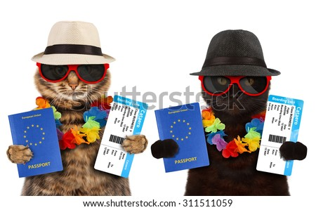 Two sweet cat go on vacation. Funny cat with passport and airline ticket. - stock photo