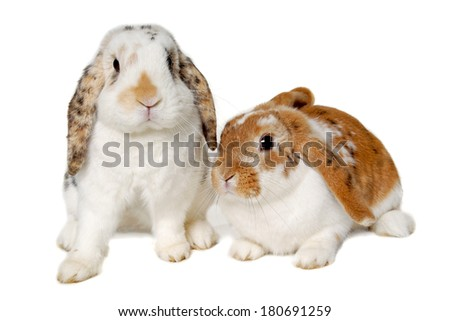 Two sweet rabbits is sitting on a white background - stock photo
