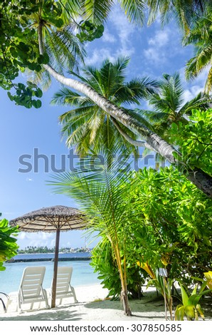 Two tanning beds on the tropical palm beach -- Concept of tropical vacations  - stock photo