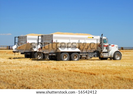 "Two ""Ten Wheeler"" trucks loaded with grain wait in a patch of barley ""stubble"" before being driven to storage. - stock photo"
