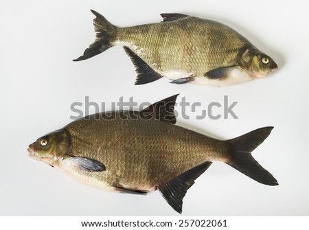 Two tench on the white surface. - stock photo