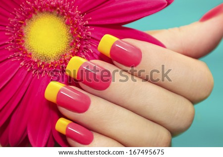 Two-tone manicure with pink and yellow varnish with flower gerbera on a blue background. - stock photo