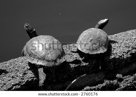 two tortoise resting under the summer sun - stock photo