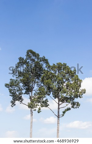 Two tree and cloudless blue sky