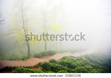 two trees in thick fog - stock photo
