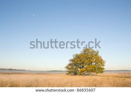Two trees on a moorland on an October morning