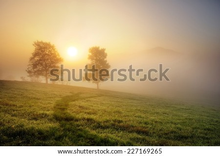 Two trees with the sun in the morning fog and mist during the autumn - stock photo