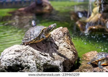 Two turtles - stock photo