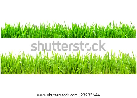 Two types of green grass on a white isolated background