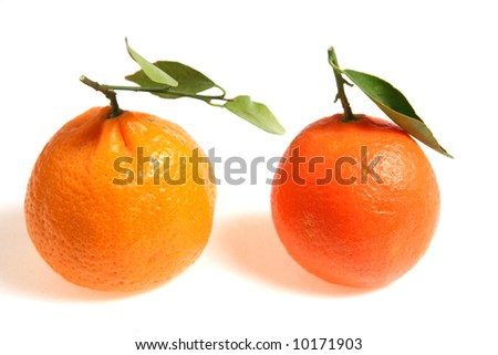 Two varieties of mandarin (small loose-skinned) oranges side by side for comparison. A tangerine is on the left and a clementine on the right. - stock photo
