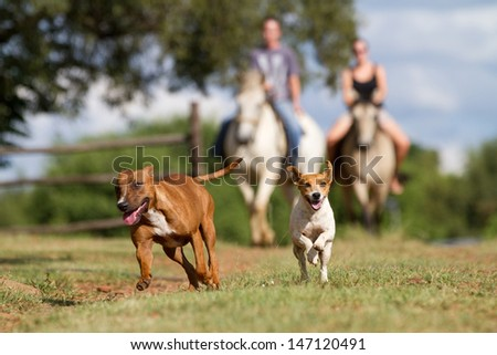 Two very happy dogs running in front of two horse riders on a farm - stock photo