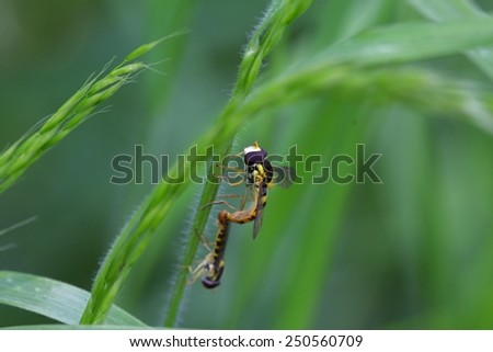 two wasps on the stalk of grass - stock photo