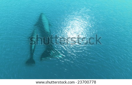 Two whales in ocean - stock photo