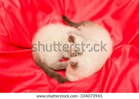 Two white and grey kittens on pink background