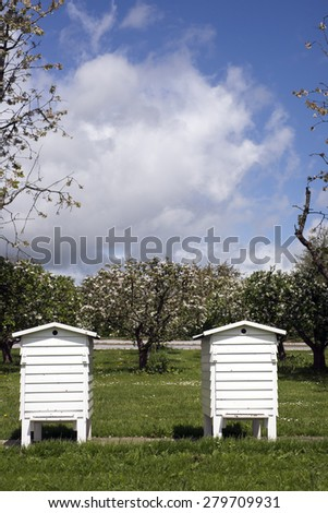 Two white bee houses in early springtime and blooming appletrees in the background - stock photo