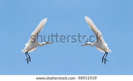 Two white birds in the sky of Sharm El Sheikh, Egypt - stock photo