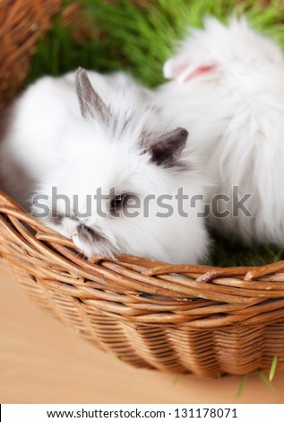 Two white bunnies are in the braided basket with green grass, close up
