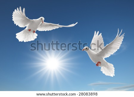 two white doves flying on clear blue sky