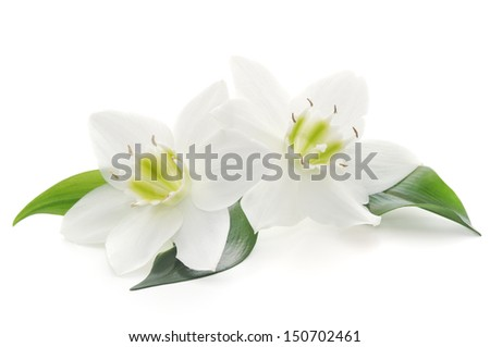 Two white flowers on a white background  - stock photo