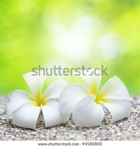 Two white flowers. Square composition. Shallow DOF. - stock photo