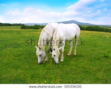 Two white horses - stock photo