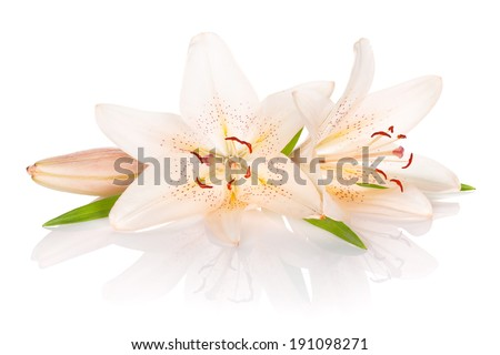 Two white lily flowers. Isolated on white background - stock photo