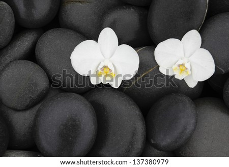 Two white orchid on pebbles