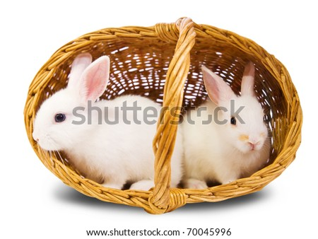 Two white rabbits in basket. Isolated on white background - stock photo