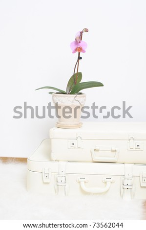 Two white suitcase, a flower and a picture in a frame - stock photo
