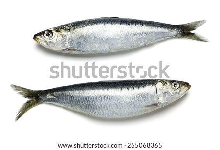 Two Whole Sardines on White Background