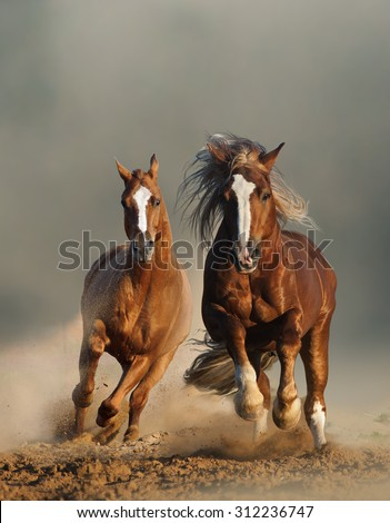 Two Wild Chestnut Horses Running Together Stock Photo