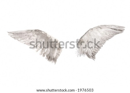 two wings isolated on white background - stock photo