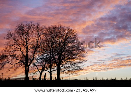 two winter trees with purple sunset - stock photo