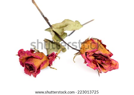 Two withered roses over white background.