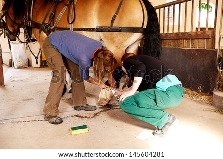 Two woman cleaning horse - stock photo