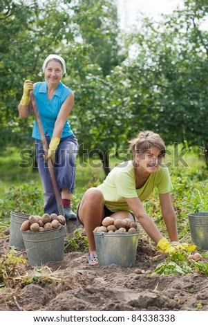 Two women harvesting potatoes in field - stock photo