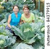 Two women  in plant of cabbage - stock photo