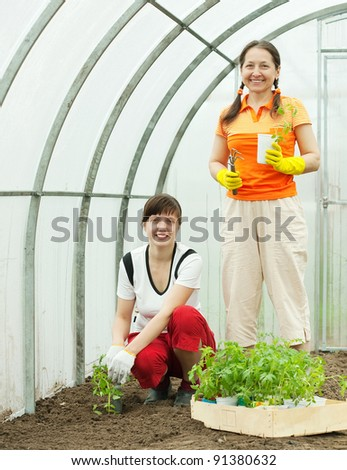 Two women planting tomato seedlings in greenhouse - stock photo