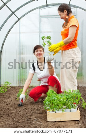 Two women planting tomato spouts in greenhouse - stock photo