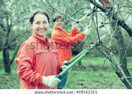 Two women pruning apple tree in the orchard