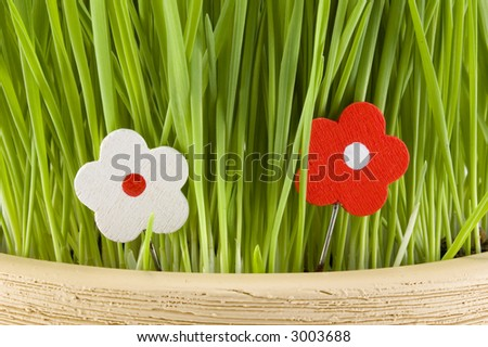 Two wood flower in green grass. - stock photo