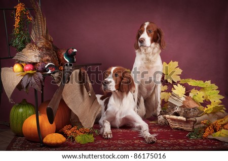 Two working dogs resting after the hunt beside a shotgun and several hung pheasant and woodcock, studio, horizontal