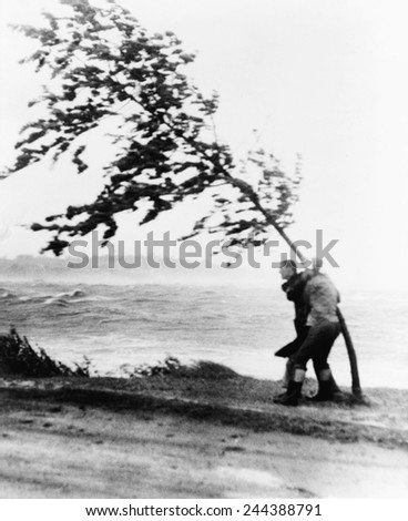 Two yachtsmen hang desperately to a tree which is almost blown over by hurricane Carol at Wollaston Beach in Quincy, Massachusetts, as their yacht smashed up against rocks. August 31, 1954. - stock photo