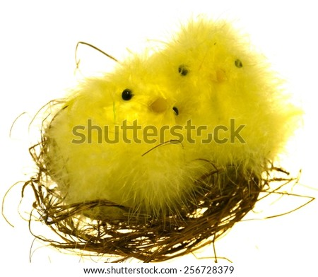 Two yellow chickens on a nest over white as a Eastern table decoration - stock photo