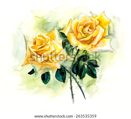Two yellow roses. Pattern from rose. Wedding drawings. Water color painting. Greeting cards. Rose background, watercolor composition. Flower backdrop.   - stock photo