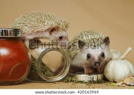 Two young, beautiful, funny and adorable baby hedgehog with spices (cooking) - stock photo