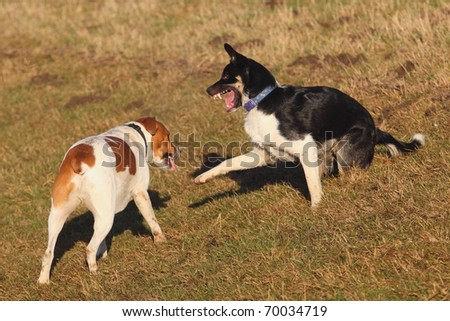 two young dogs play fighting on a grassy bank - stock photo