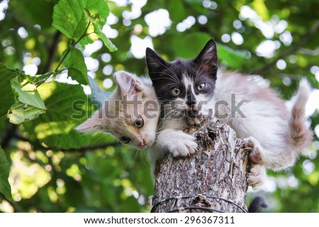 Two young domestic kittens sitting on tree under green leaves - stock photo