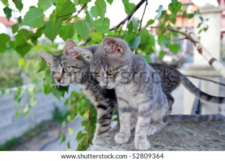 two young domestic mixed-bread gray cats over green leaves